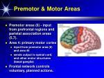 premotor motor areas