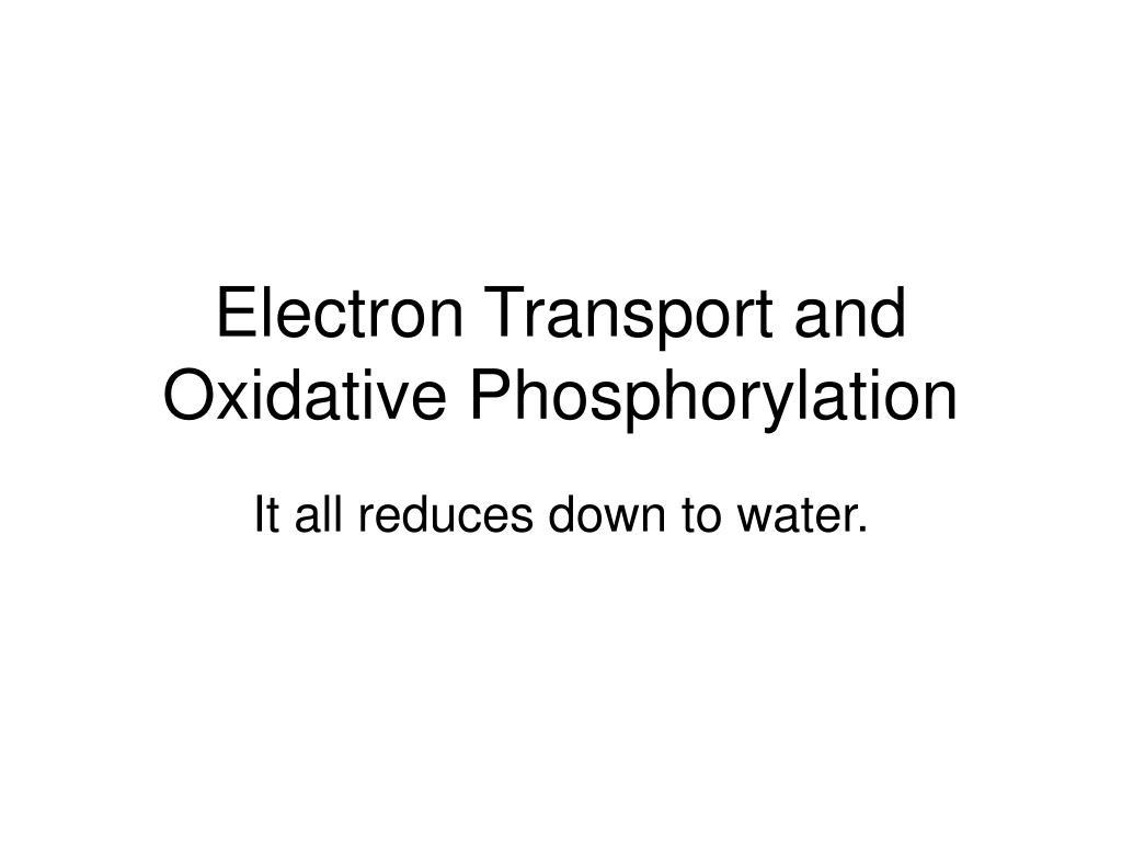 electron transport and oxidative phosphorylation l.