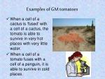 examples of gm tomatoes