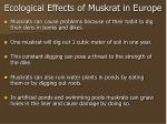 ecological effects of muskrat in europe
