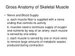 gross anatomy of skeletal muscle3
