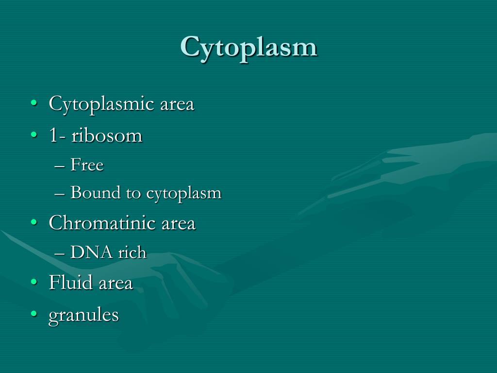 Cytoplasm