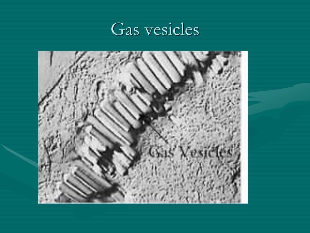 Gas vesicles