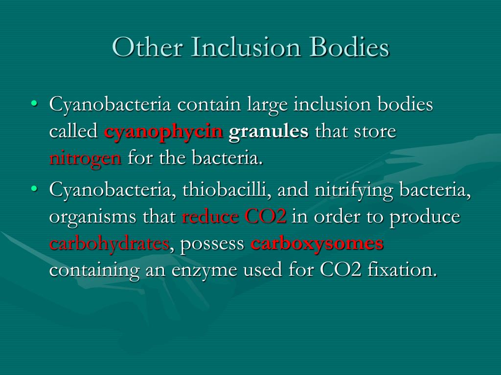 Other Inclusion Bodies