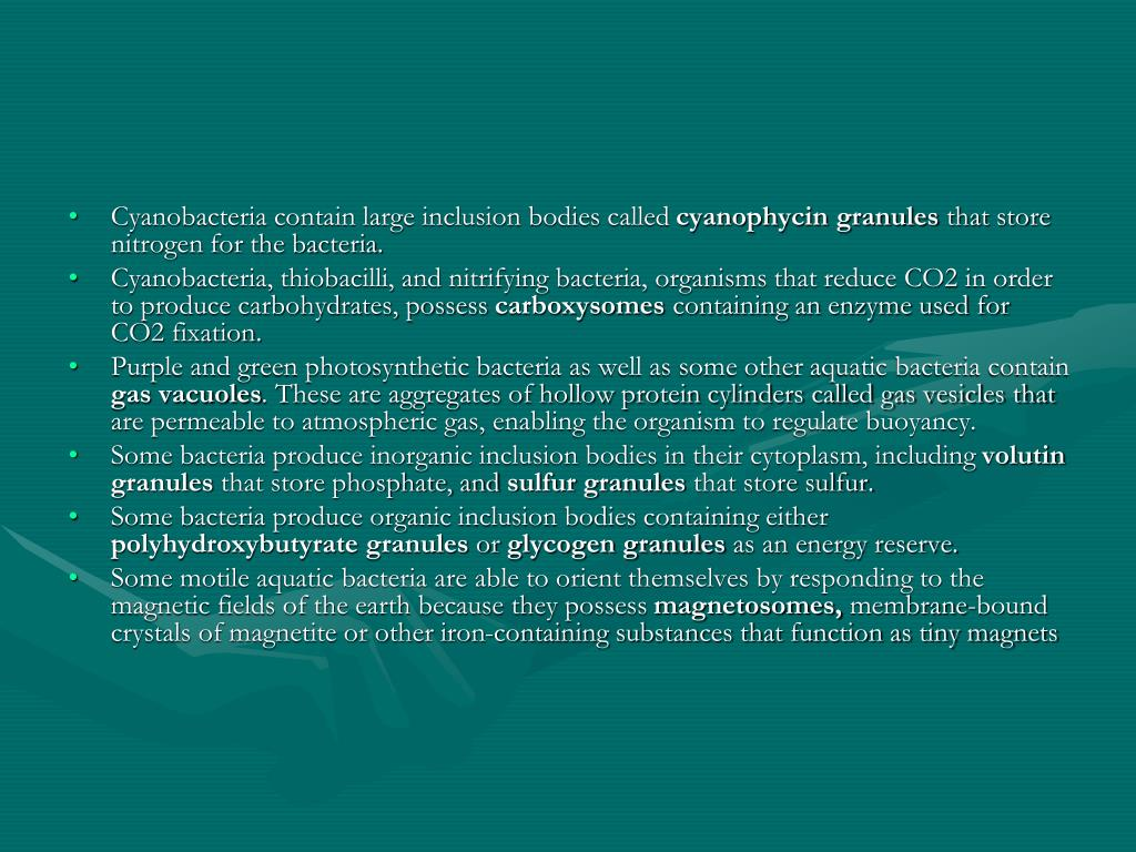 Cyanobacteria contain large inclusion bodies called