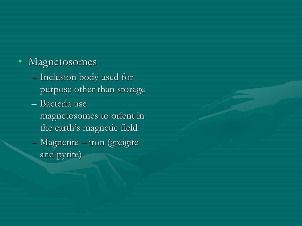 Magnetosomes