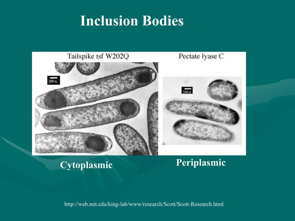 Inclusion Bodies