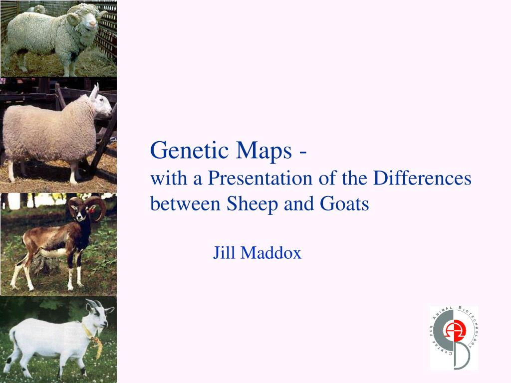 genetic maps with a presentation of the differences between sheep and goats l.