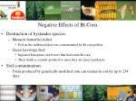 negative effects of bt corn