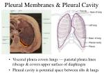 pleural membranes pleural cavity