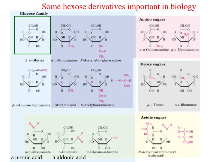 Some hexose derivatives important in biology