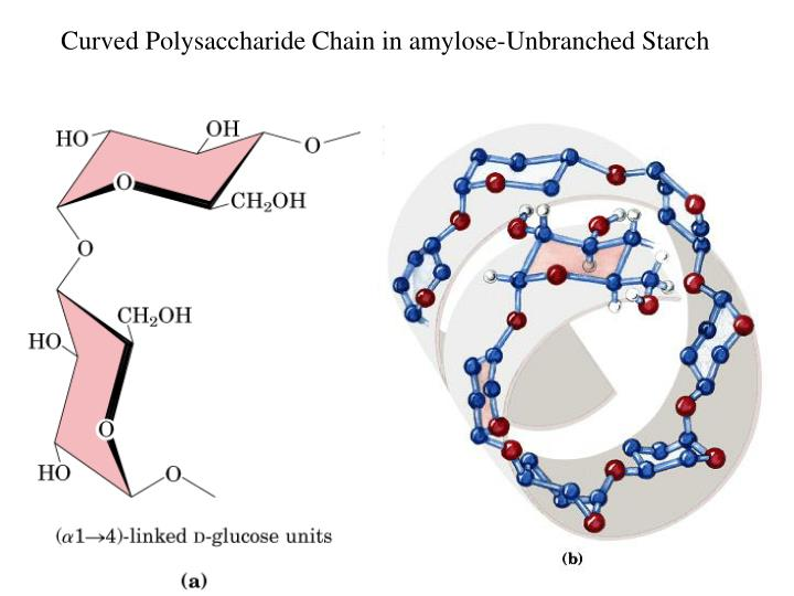Curved Polysaccharide Chain in amylose-Unbranched Starch