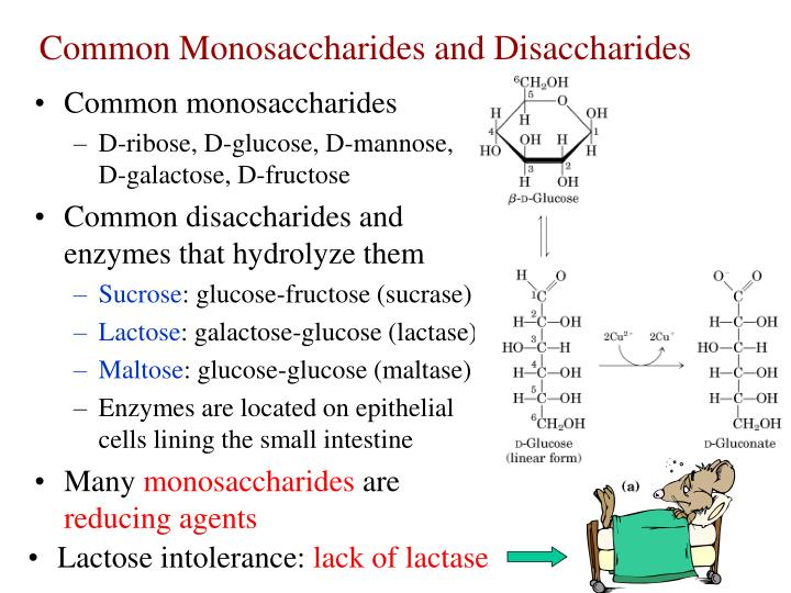 Common Monosaccharides and Disaccharides
