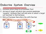 endocrine system overview7