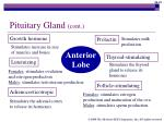 pituitary gland cont