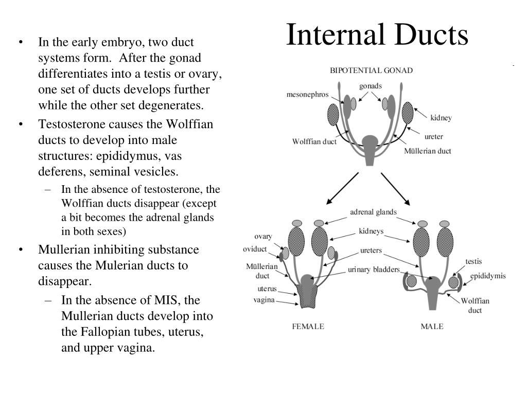 Internal Ducts