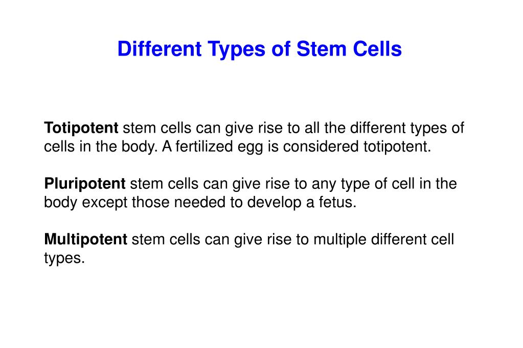 Different Types of Stem Cells