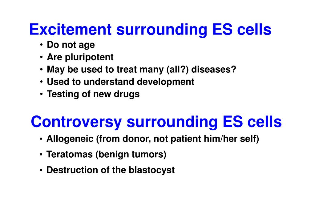 Excitement surrounding ES cells
