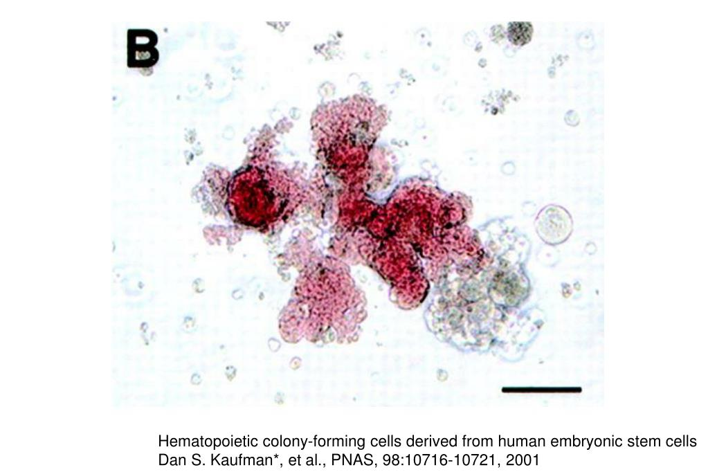 Hematopoietic colony-forming cells derived from human embryonic stem cells