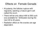 effects on female gonads39