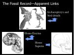 the fossil record apparent links