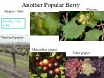 another popular berry
