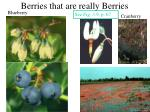 berries that are really berries1