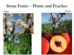 stone fruits plums and peaches