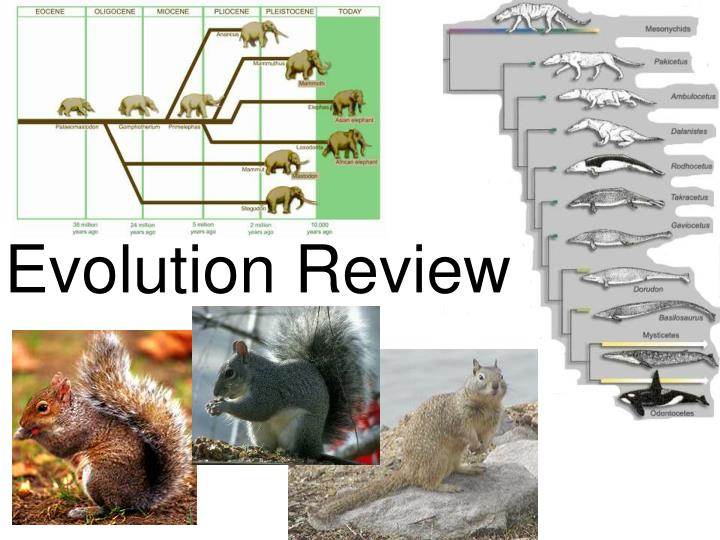evolution review n.