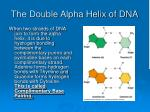 the double alpha helix of dna44