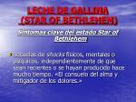 leche de gallina star of bethlehem