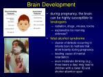 brain development7