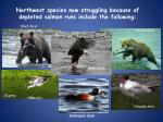 northwest species now struggling because of depleted salmon runs include the following