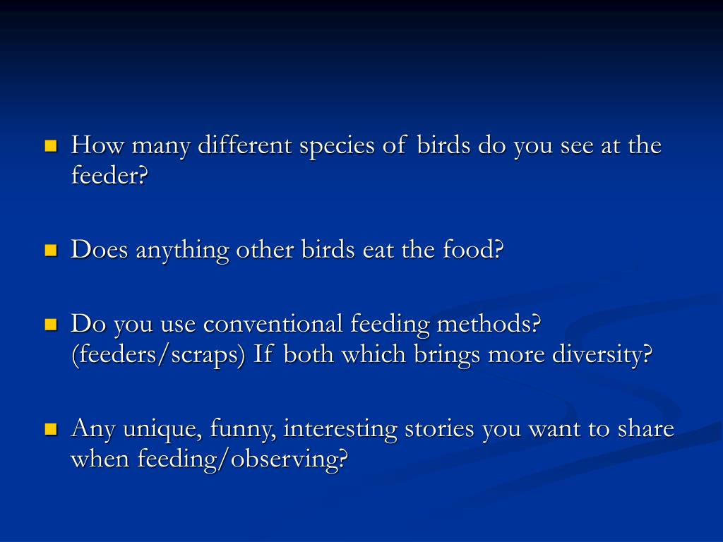 How many different species of birds do you see at the feeder?
