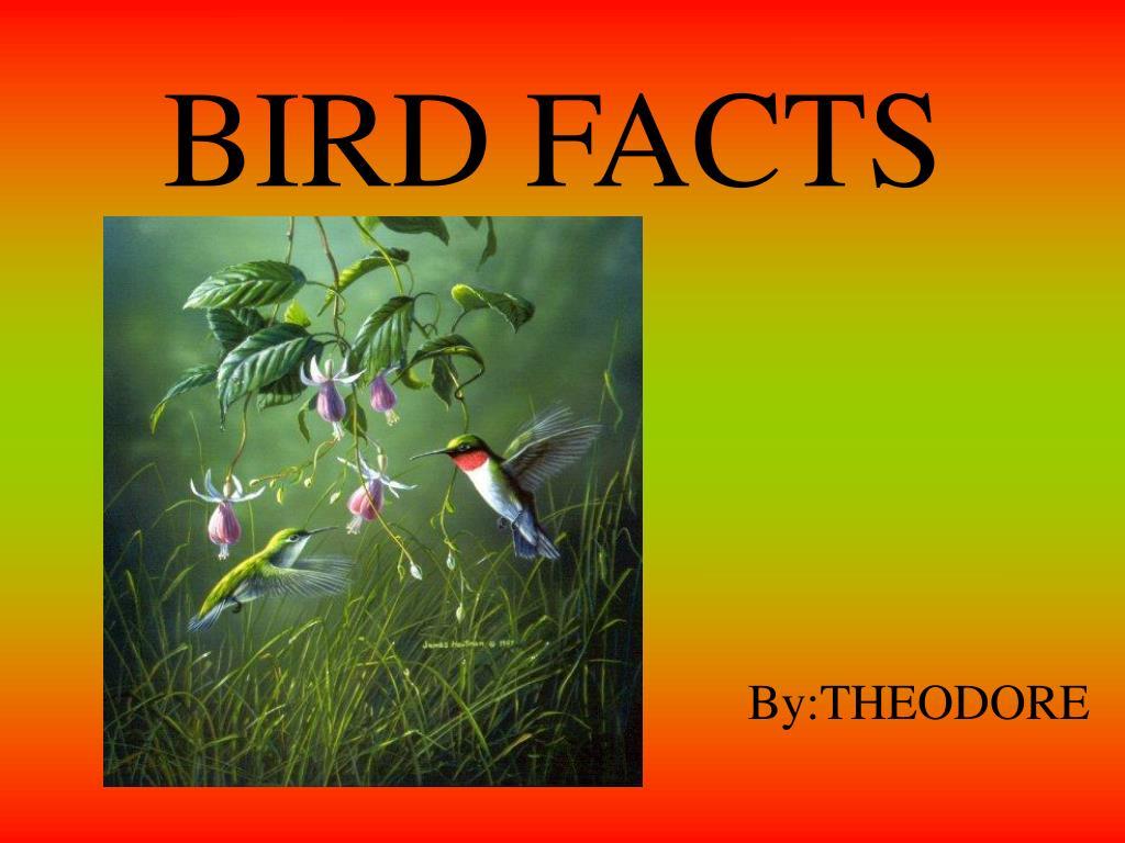 bird facts l.