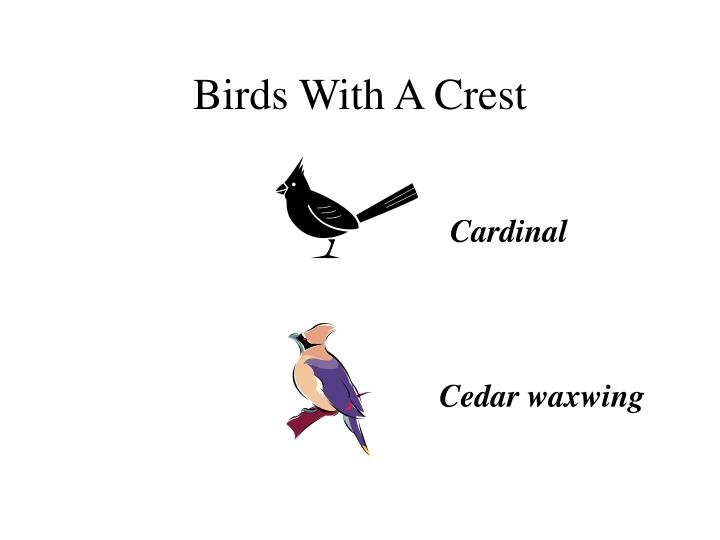 Birds with a crest