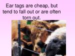 ear tags are cheap but tend to fall out or are often torn out