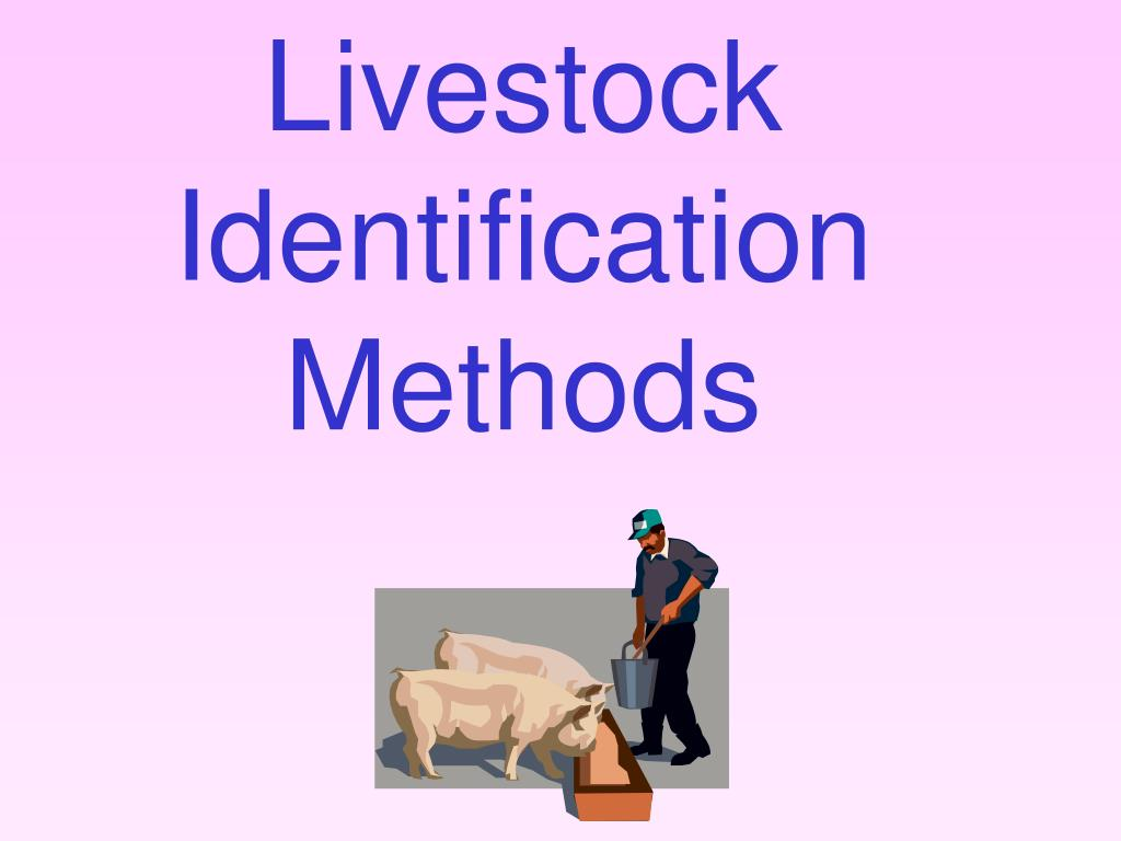 livestock identification methods l.