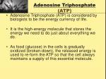 adenosine triphosphate atp