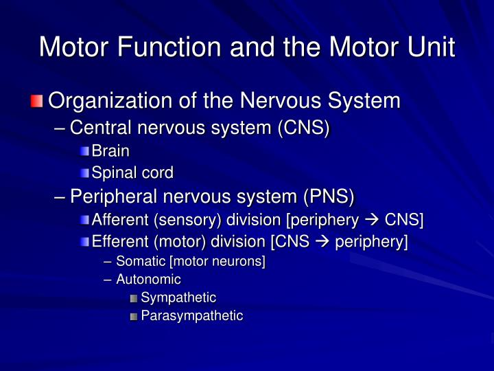 motor function and the motor unit n.