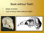 beak without teeth