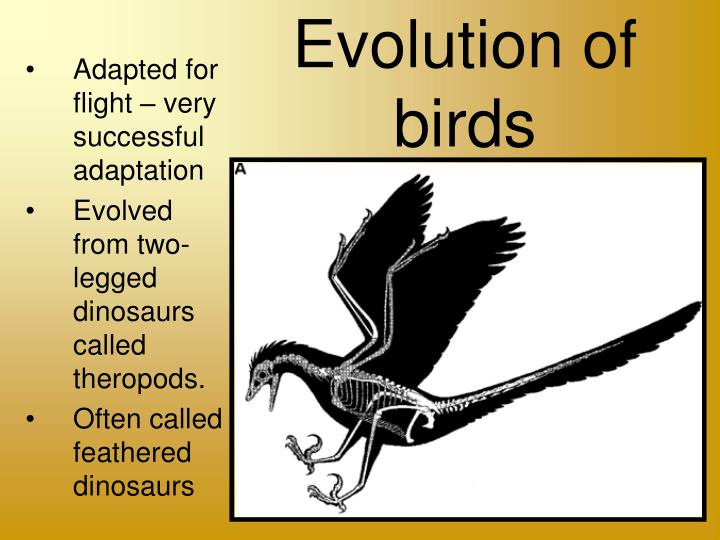 Ppt evolution of birds from reptiles powerpoint presentation.