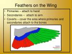 feathers on the wing