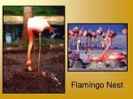 flamingo nest