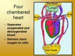four chambered heart
