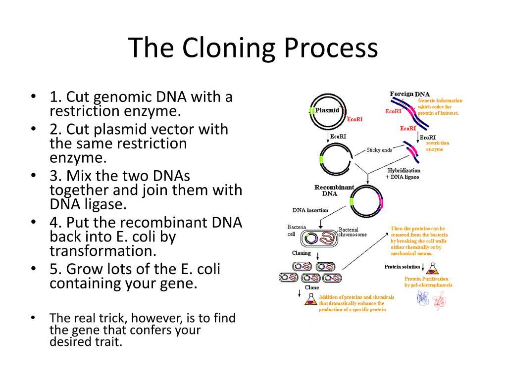 The Cloning Process