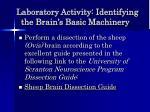 laboratory activity identifying the brain s basic machinery