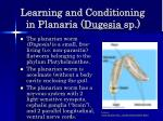 learning and conditioning in planaria dugesia sp
