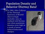 population density and behavior norway rats