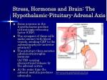 stress hormones and brain the hypothalamic pituitary adrenal axis